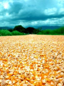 golden road by alcausin