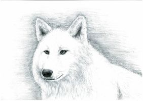 wolf by Andrew-AR