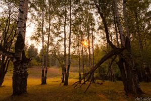Trees in the morning by Sulde