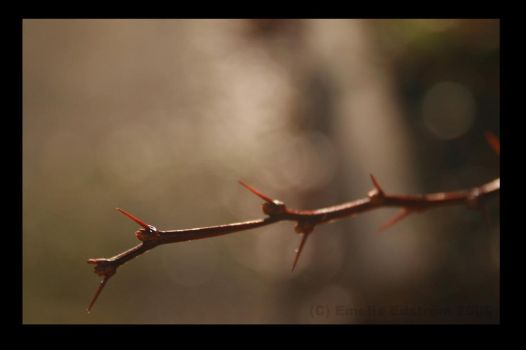 I'm As Thorny As You. by Empa85