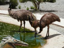 Emu family by Chihito