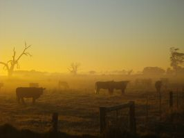 Foggy Cows 001 by hb593200