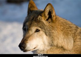 Wolfy .5 by PaPeRDoLLLL