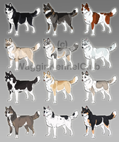 Siberian Husky Adoptables! by WagginKennelClub