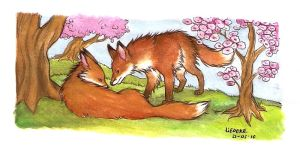 foxes by Liedeke