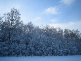 Snowy woods No.10 by redrockstock