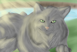 Greystipe In Riverclan by Kyaflufflewolf