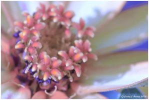 Flowers Within A Flower by CecilyAndreuArtwork