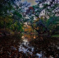 Autumn comes to Texas by badchess