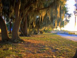 Spanish Moss by bricolage54