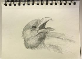 Crow by Johnathin801