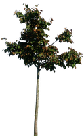 Little tree 01 png by gd08