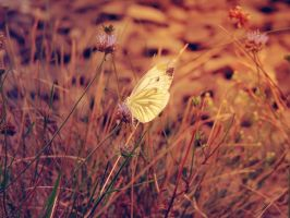 The last days of summer.. by melliiex3