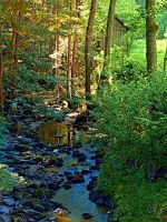 Forest, a river, a valley and summertime by patrickjobst