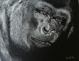 Gorilla in charcoal by stevenbeattie