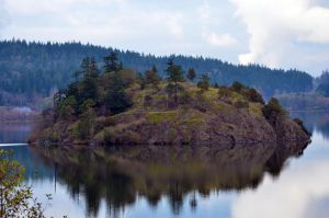Island at Lake Cambell by ShannonCPhotography