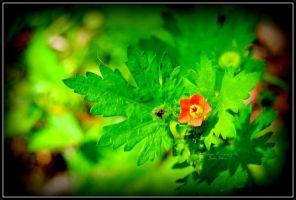 Wild Flower grows green by Godstreasures