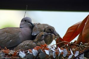 And more baby pigeons! by YvdlArt