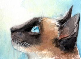 Curious Siamese ACEO by Pannya