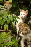Cats in the Backyard by seny0rita
