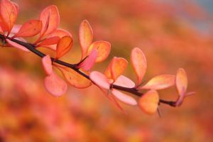 Autumn colors by Prouda