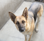 East Valley Animal Shelter 19 by Deliquesce-Flux