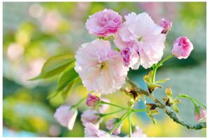 Touch of spring by Serend1pity