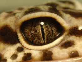 Leopard Gecko Eye by Kanchii
