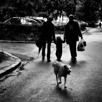 'follow the dog' by photofreak07