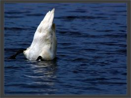 Swan Dive by Elppin