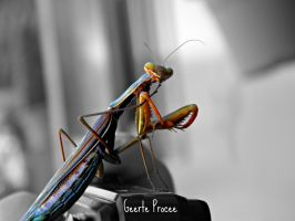 praying mantis by GeerteProcee
