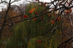 late in autumn by Next--LVL