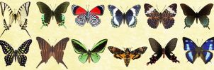 Windows Icons - Butterflies Set 1 by Nastino47