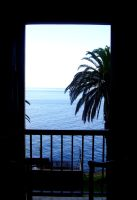 Palms through window by Jules-one