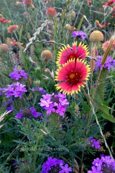 Wildflowers by Frolay
