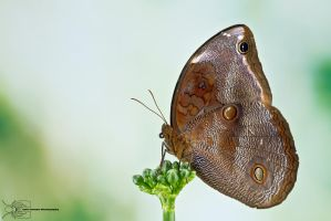 Butterfly from Colombia by ColinHuttonPhoto