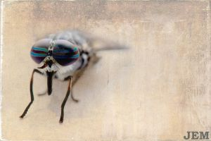 Horsefly by Sabor7