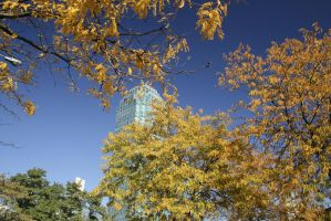 Citi in the Fall by psychowolf21