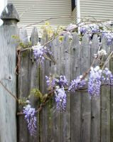 Flowery Fence I by 3dmirror-stock