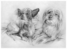 Chinese Crested Friends by hatefueled