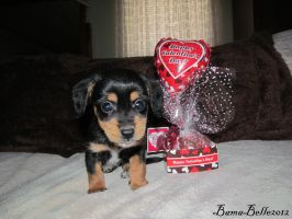 Best Valentines Day Ever by BamaBelle2012