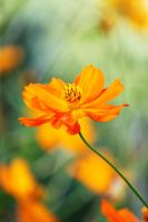 Orange Flower 3 by CASPER1830