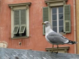 Seagull in town by Momotte2