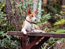 Basenji Houston 24 by 0Encrypted0