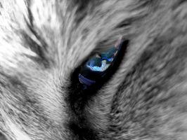 cat's eye by lapenna99