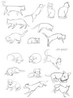 cat and dog sketches by kristaia