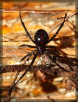 Black Widow 40D0030795 by Cristian-M