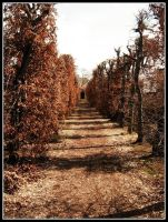 Way 1 by Lusor