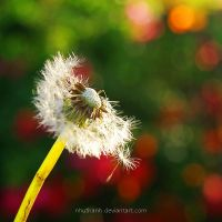 holding on by nhuthanh