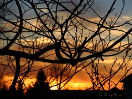 Silhouette of Branches. by Michies-Photographyy